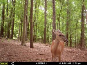 2015_REVIEWSAMPLE_MOULTRIE_A-5-Gen2_0008