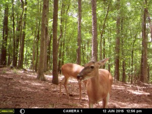 2015_REVIEWSAMPLE_MOULTRIE_A-5-Gen2_0011