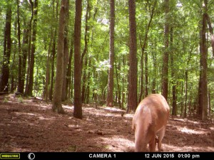 2015_REVIEWSAMPLE_MOULTRIE_A-5-Gen2_0014