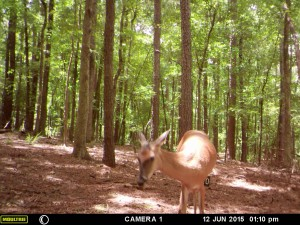 2015_REVIEWSAMPLE_MOULTRIE_A-5-Gen2_0019