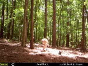 2015_REVIEWSAMPLE_MOULTRIE_A-5-Gen2_0025