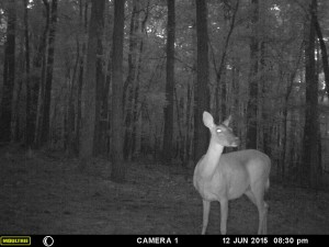 2015_REVIEWSAMPLE_MOULTRIE_A-5-Gen2_0032