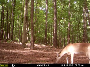 2015_REVIEWSAMPLE_MOULTRIE_A-5-Gen2_0034