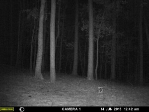 2015_REVIEWSAMPLE_MOULTRIE_A-5-Gen2_0040