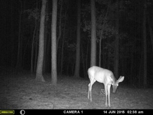 2015_REVIEWSAMPLE_MOULTRIE_A-5-Gen2_0041