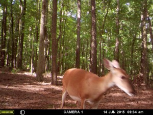 2015_REVIEWSAMPLE_MOULTRIE_A-5-Gen2_0047