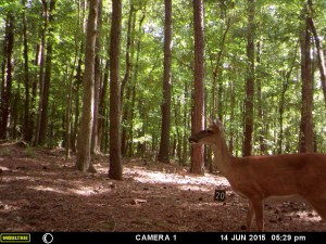 2015_REVIEWSAMPLE_MOULTRIE_A-5-Gen2_0052