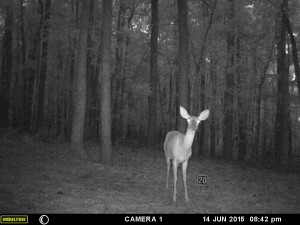 2015_REVIEWSAMPLE_MOULTRIE_A-5-Gen2_0070