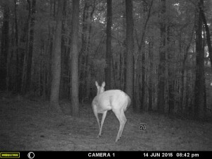 2015_REVIEWSAMPLE_MOULTRIE_A-5-Gen2_0071