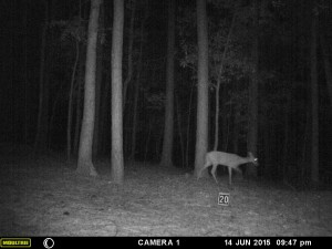 2015_REVIEWSAMPLE_MOULTRIE_A-5-Gen2_0072