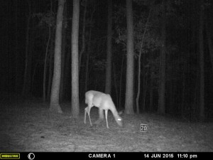 2015_REVIEWSAMPLE_MOULTRIE_A-5-Gen2_0073