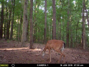 2015_REVIEWSAMPLE_MOULTRIE_A-5-Gen2_0078