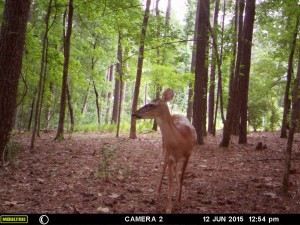 2015_REVIEWSAMPLE_MOULTRIE_A-7i_0012