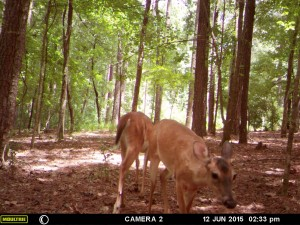 2015_REVIEWSAMPLE_MOULTRIE_A-7i_0026