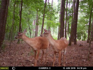 2015_REVIEWSAMPLE_MOULTRIE_A-7i_0035