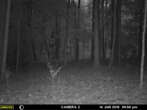 2015_REVIEWSAMPLE_MOULTRIE_A-7i_0074