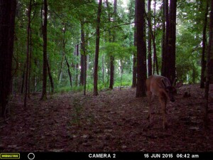 2015_REVIEWSAMPLE_MOULTRIE_A-7i_0079