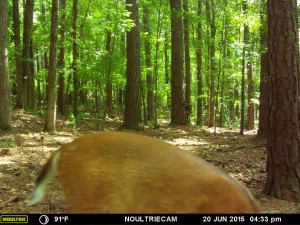 2015_REVIEWSAMPLE_MOULTRIE_M-550-Gen2_0006