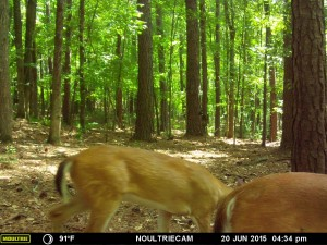 2015_REVIEWSAMPLE_MOULTRIE_M-550-Gen2_0007
