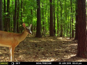 2015_REVIEWSAMPLE_MOULTRIE_M-550-Gen2_0010