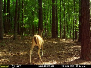 2015_REVIEWSAMPLE_MOULTRIE_M-550-Gen2_0011