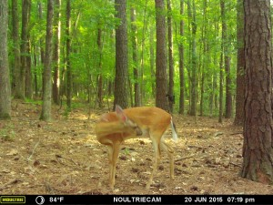 2015_REVIEWSAMPLE_MOULTRIE_M-550-Gen2_0015