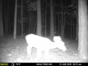 2015_REVIEWSAMPLE_MOULTRIE_M-550-Gen2_0021