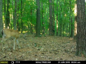 2015_REVIEWSAMPLE_MOULTRIE_M-550-Gen2_0024