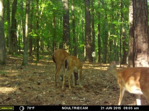 2015_REVIEWSAMPLE_MOULTRIE_M-550-Gen2_0035