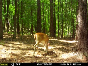 2015_REVIEWSAMPLE_MOULTRIE_M-550-Gen2_0043