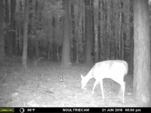 2015_REVIEWSAMPLE_MOULTRIE_M-550-Gen2_0044