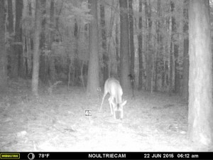 2015_REVIEWSAMPLE_MOULTRIE_M-550-Gen2_0047