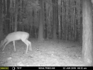 2015_REVIEWSAMPLE_MOULTRIE_M-550-Gen2_0049