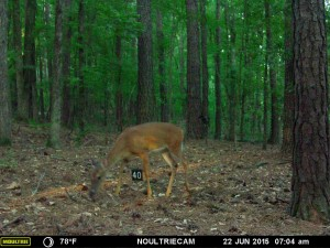 2015_REVIEWSAMPLE_MOULTRIE_M-550-Gen2_0050
