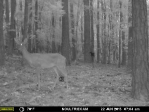 2015_REVIEWSAMPLE_MOULTRIE_M-550-Gen2_0051