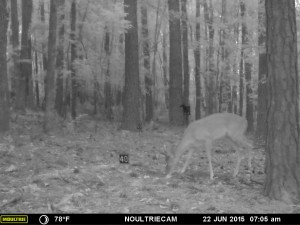 2015_REVIEWSAMPLE_MOULTRIE_M-550-Gen2_0053