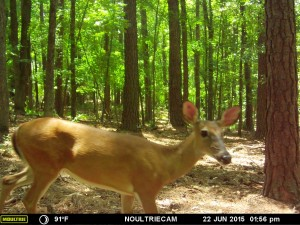 2015_REVIEWSAMPLE_MOULTRIE_M-550-Gen2_0065