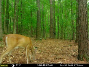 2015_REVIEWSAMPLE_MOULTRIE_M-550-Gen2_0188
