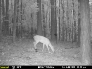 2015_REVIEWSAMPLE_MOULTRIE_M-550-Gen2_0228
