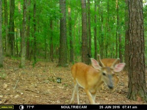 2015_REVIEWSAMPLE_MOULTRIE_M-550-Gen2_0245