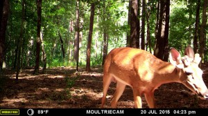 2015_REVIEWSAMPLE_MOULTRIE_M-880-Gen2_0005