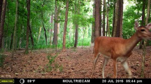 2015_REVIEWSAMPLE_MOULTRIE_M-880-Gen2_0009