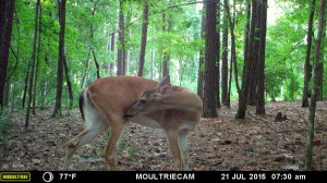 2015_REVIEWSAMPLE_MOULTRIE_M-880-Gen2_0012