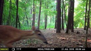 2015_REVIEWSAMPLE_MOULTRIE_M-880-Gen2_0022