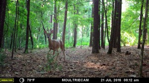 2015_REVIEWSAMPLE_MOULTRIE_M-880-Gen2_0024