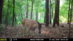 2015_REVIEWSAMPLE_MOULTRIE_M-880-Gen2_0027