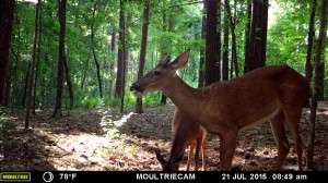 2015_REVIEWSAMPLE_MOULTRIE_M-880-Gen2_0037