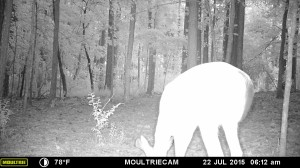 2015_REVIEWSAMPLE_MOULTRIE_M-880-Gen2_0066
