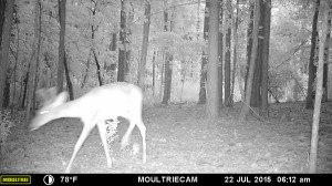2015_REVIEWSAMPLE_MOULTRIE_M-880-Gen2_0068