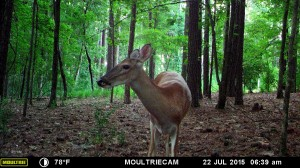 2015_REVIEWSAMPLE_MOULTRIE_M-880-Gen2_0069